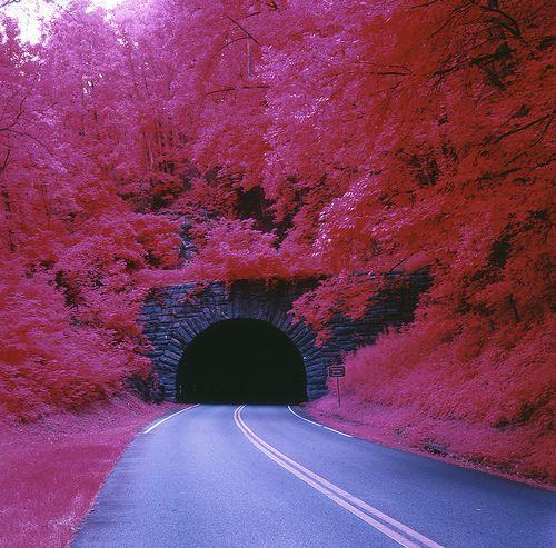pont-arbre rose