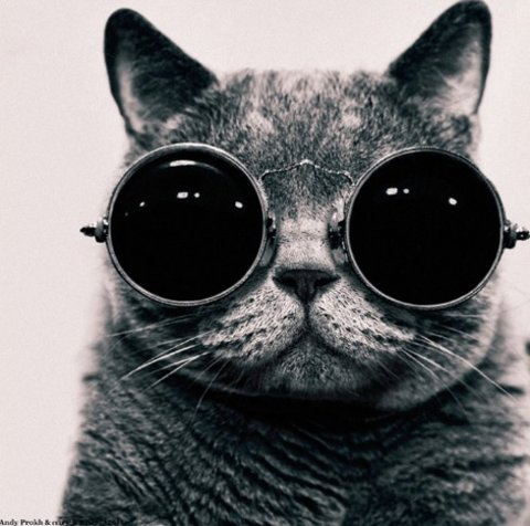 chat-lunettes