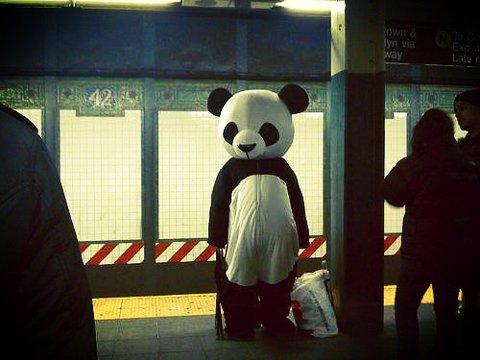 panda gare tout seul